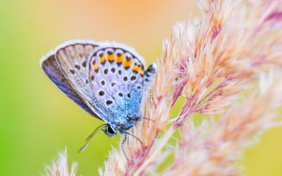 Caterpillar to a Butterfly ~ Reality Check for Overnight Transformation Expectations